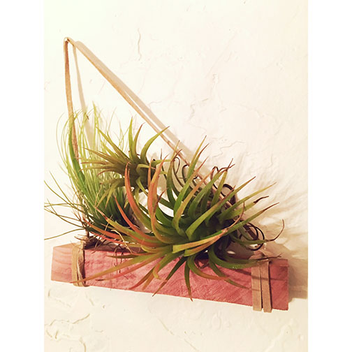 Airplant-holder