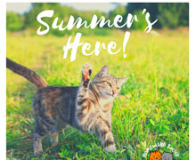 Homeward Bound Cat Adoption Seasonal Appeals